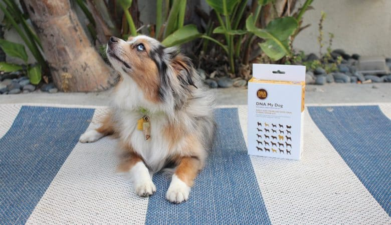 DNA Test Kit Can Help You Better Care for Your Dog