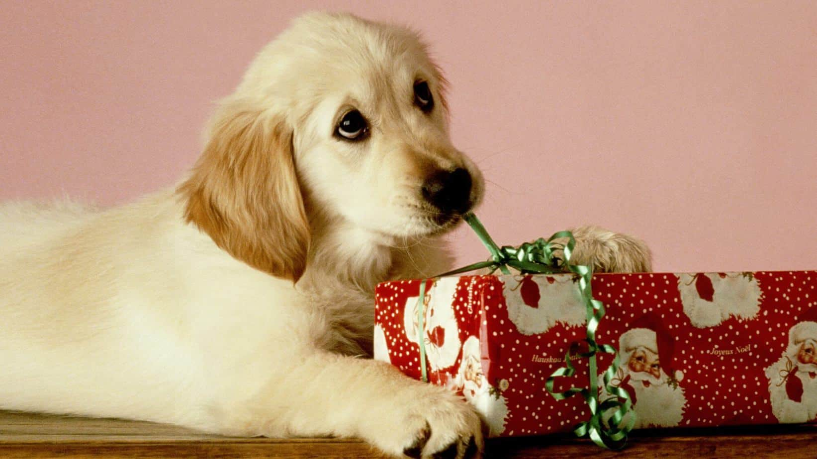 7 Amazing Pet Gifts on Sale for Our Semi-Annual Sale